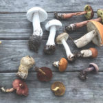 Boletes Ask for Butter